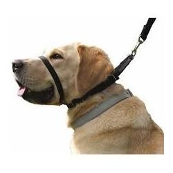 Collar Perro Canny Negro Talla 2