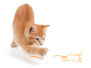 Piensos para gato