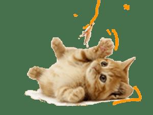 Accesorios para Gato