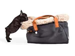 Transporte para perro